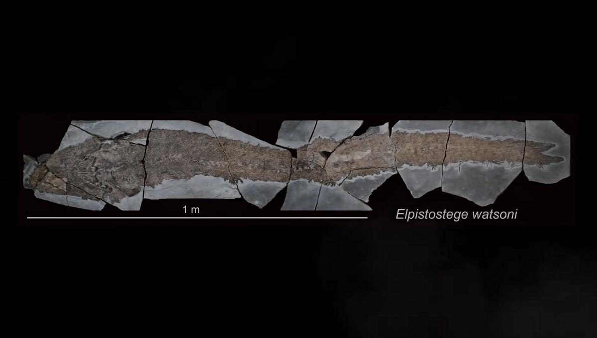 Descoberta de fóssil de peixe revela detalhes da evolução dos dedos e da mão dos tetrópodes, que incluem os humanos